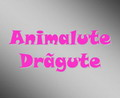 Animalute Dragute